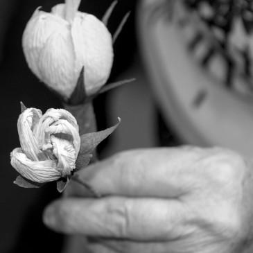 La creazione dei fiori